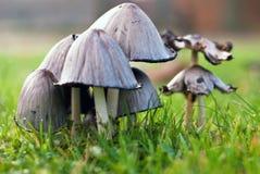 Mushrooms on green meadow Royalty Free Stock Photo