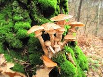 Mushrooms. Royalty Free Stock Image
