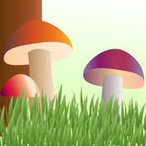 Mushrooms grow on a forest glade. Under a tree Royalty Free Stock Photos