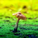 Mushrooms grow on moss, macro photography stock photos