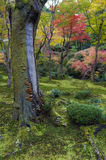 Mushrooms grow on tree bark during autumn in Japanese garden in Kyoto Stock Photos