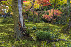 Mushrooms grow on tree bark during autumn in Japanese garden in Kyoto Stock Photo