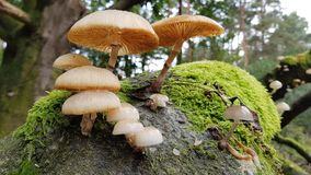 Mushrooms growing on a tree Stock Photos