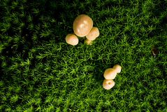 Mushrooms growing on a field vert Stock Photo
