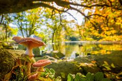 Mushrooms Growing Next To A Pond