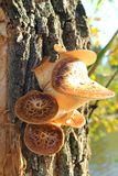 Mushrooms growing on tree Royalty Free Stock Photos
