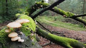 Mushrooms growing on a tree covered in moss Stock Image