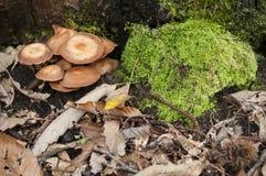 Mushrooms growing on the underbrush Stock Image