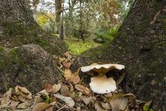 Mushrooms growing on the underbrush Stock Photos