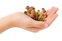 Mushrooms in hand Stock Photos