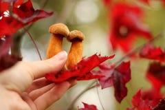 Mushrooms in hand. Two mushroom in man hand stock photography