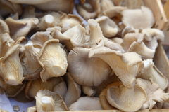 Mushrooms healthy food close up Stock Images