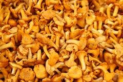 Mushrooms healthy food close up Royalty Free Stock Photography