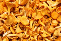 Mushrooms healthy food close up Stock Photography