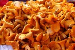 Mushrooms healthy food close up Stock Photo