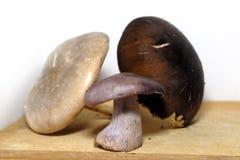 Mushrooms. Healthy vegetarian food. The mushrooms Stock Photos