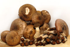 Mushrooms. Healthy vegetarian food. The mushrooms Stock Images