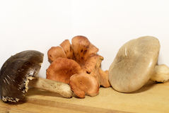 Mushrooms. Healthy vegetarian food. The mushrooms Stock Image