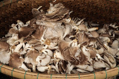 Mushrooms heaped up in wicker basket. In a pile Royalty Free Stock Photography