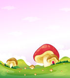 Mushrooms in the hills Stock Photos