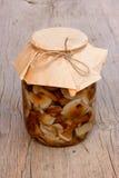 Mushrooms honey agaric in glass gar Stock Images