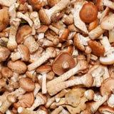 Mushrooms honey Stock Images