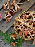Mushrooms honey agarics in basket on wooden background. Top view Stock Images