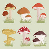 Mushrooms Stock Photography