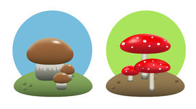 Mushrooms. Illustration of edible and inedible mushrooms Royalty Free Stock Image