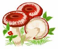 Mushrooms Royalty Free Stock Photos