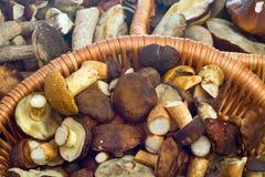 Free Mushrooms In Baskets Stock Image - 11202491