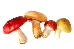 Mushrooms isolated. Clipping path included stock images