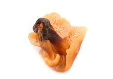 Mushrooms isolated Stock Image