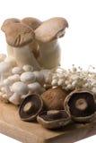 Mushrooms Isolated Royalty Free Stock Photo