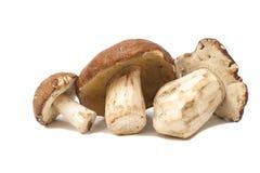 Mushrooms isolated on white. Background Royalty Free Stock Photo