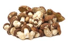 Mushrooms isolated on white. Background Stock Photos