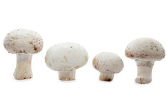Mushrooms isolated on white. Fresh porcini mushrooms isolated on white background Stock Photos