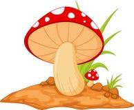 Mushrooms isolated on white Royalty Free Stock Photo
