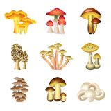 Mushrooms isolated on white vector set Stock Image