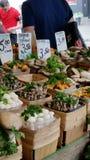 Mushrooms. Jean Talon Market Royalty Free Stock Image