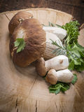 Mushrooms in a kitchen - Boletus edulis Stock Images