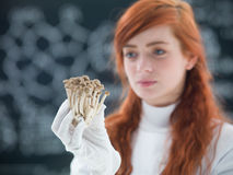 Mushrooms laboratory analysis. Macro of a bunch of mushrooms holded in hands by a preety face student in a chemisty lab with a blackboard on the background stock photos