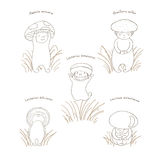 Mushrooms with Latin names, outline. Hand drawn vector illustration of cute mushrooms with Latin names: fly amanita, red capped scaber stalk, honey fungus Royalty Free Stock Image