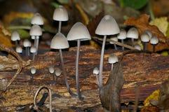 Mushrooms leaf rainforest грибы листья лес. Mushrooms leafs nature forest food log deck rainforest Dry leaf roots stock photography
