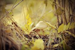 Mushrooms among leaves Stock Photos