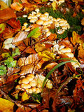 Mushrooms and leaves in autumn Stock Photography