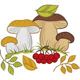 Mushrooms, leaves and berries, autumn vector Royalty Free Stock Photography