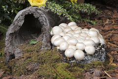 Mushrooms and Log. Mushrooms growing on wood near a log Stock Photo