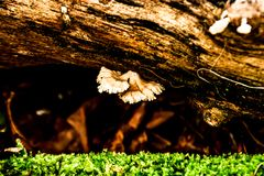 Mushrooms on a log in the garden. stock photography