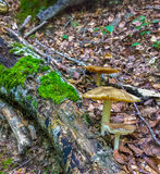 Mushrooms and log with moss Stock Photography